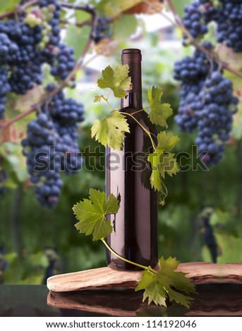 Grape leaves around a bottle of wine - stock photo