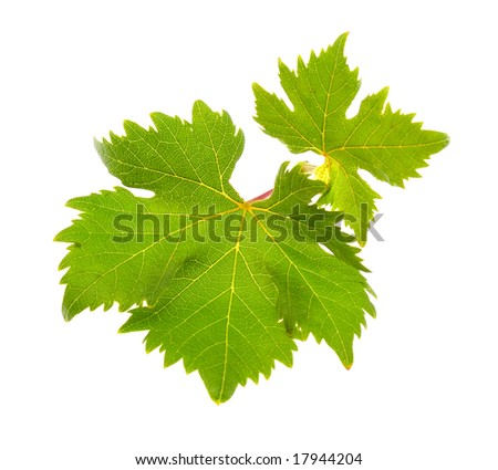 Grape leaves isolated on white background