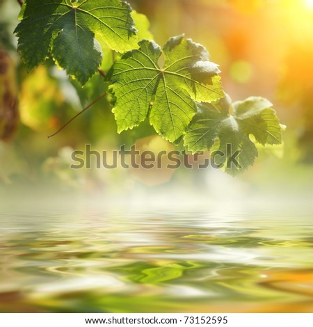 Grape leaves over water. Shallow DOF. - stock photo