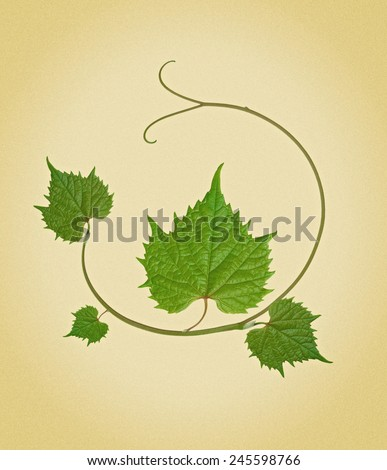 grape leaves. picture in retro style - stock photo