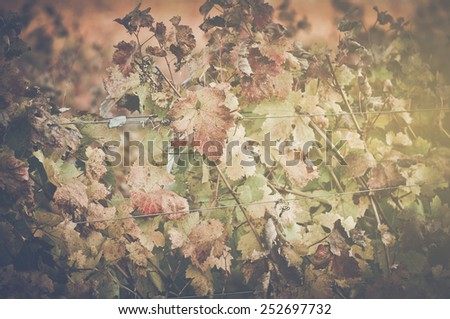 Grape Leaves with Vintage Instagram Film Style - stock photo