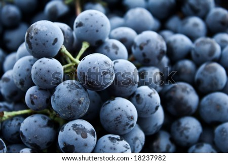 Grape selective focus for backgrounds - stock photo
