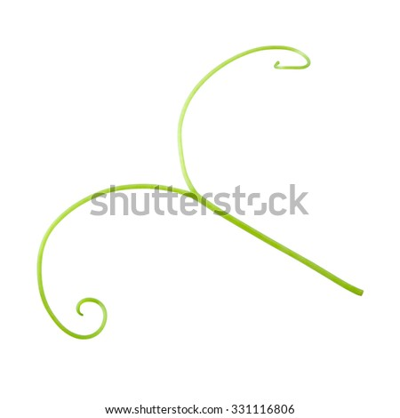 Grape tendril isolated on white. With clipping path.