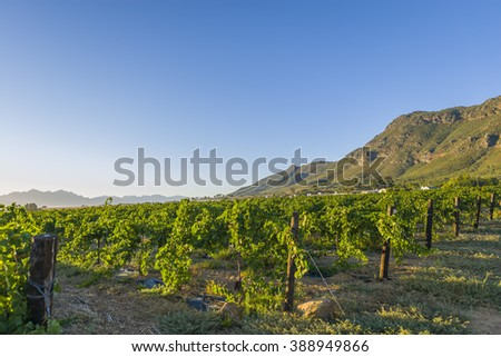 Grape vineyard hill landscape with blue sky