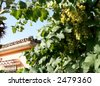 grapes and house in the sun - stock photo