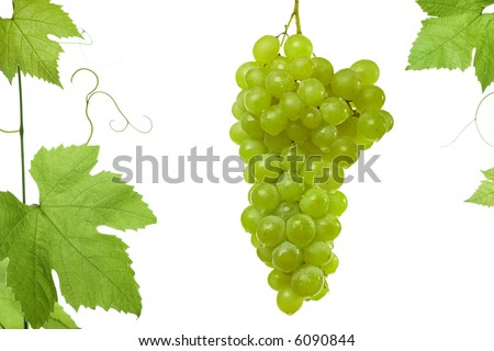 grapes and vine leaves isolated on white background with copy-space.Please take a look at my other images of grape-leaves - stock photo