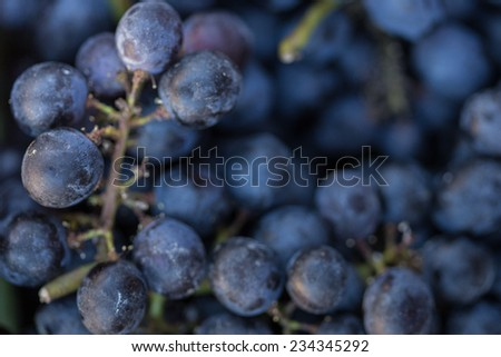 Grapes background. - stock photo