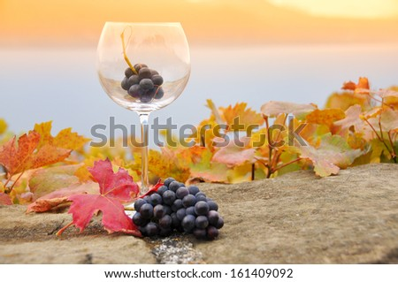 Grapes in the glass. Terrace vineyards in Lavaux region, Switzerland - stock photo