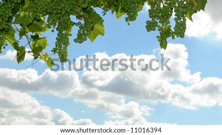 Grapes on the sky background