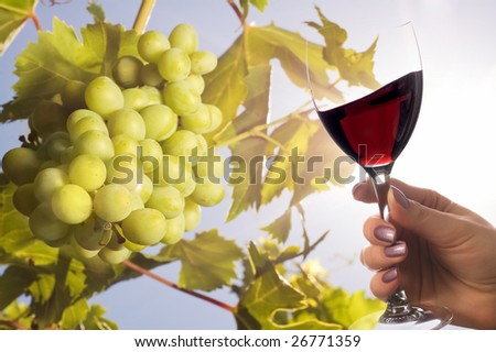 Grapes under the sun and glass of wine - stock photo