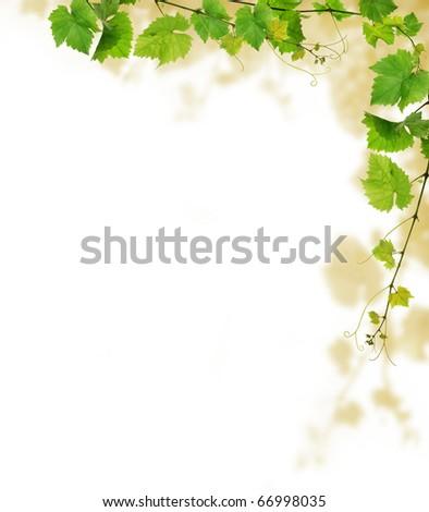 Grapevine border design, on white background - stock photo