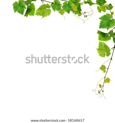 Grapevine border with fresh vine branches on white background