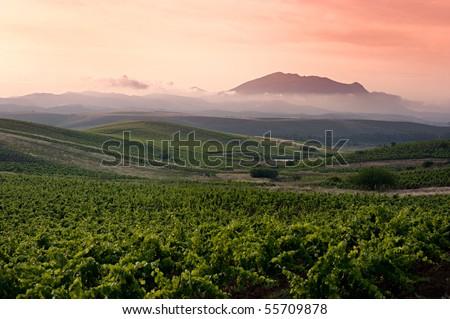 grapevine fields in sicily - stock photo
