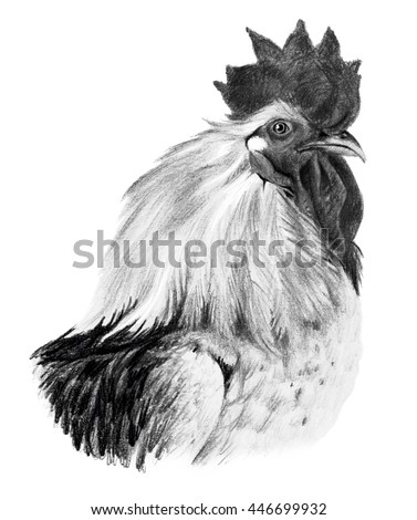 Graphic drawing. Head of rooster in profile on a white background. - stock photo