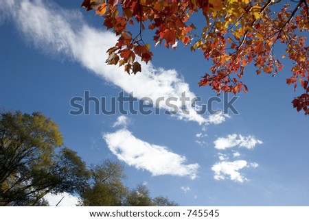 Graphical view of Autumn colors - stock photo