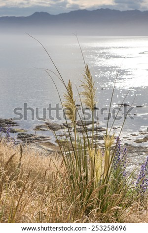 Grass against the sea in a sunset light - stock photo