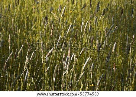 Grass and blooming flowers in a meadow - stock photo