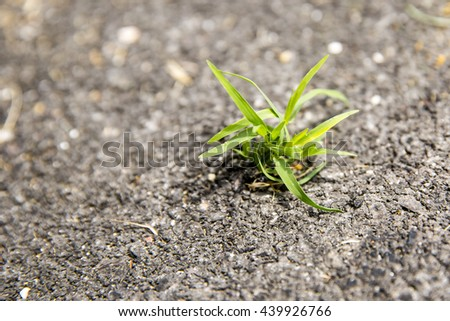 Grass and broken asphalt. Damaged road surface and grass growing out of the cracks - stock photo