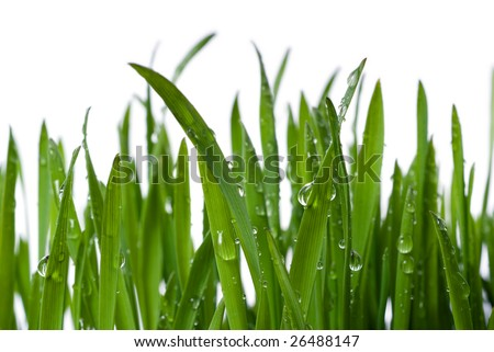 grass and dew - stock photo