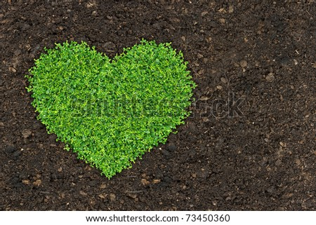 grass and green plants growing a heart shape on soil manure in the birds eye view. - stock photo
