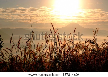 Grass and sunrise in Mountain