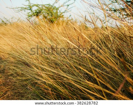 grass and sunshine  - stock photo