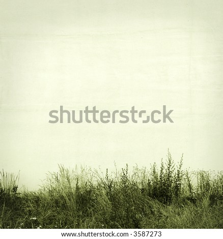 grass and white wall