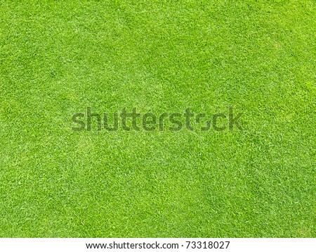 Grass as texture or background - stock photo