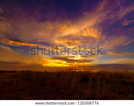 Grass at sunset - stock photo