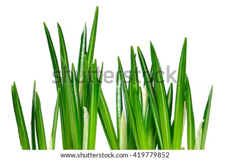 Grass background. Fresh, green grass, isolated on white.  - stock photo