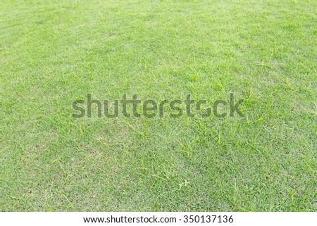 Grass background in Bhuddhamonthon garden, Nakhon Pathom, Thailand - stock photo