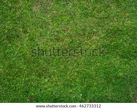 grass background texture. top view