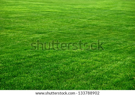 Grass Background With Vignette - stock photo