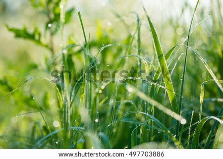 Grass background with water drops with very shallow depth of field