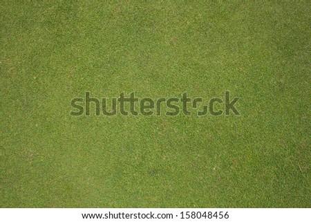 Grass beautiful background - stock photo