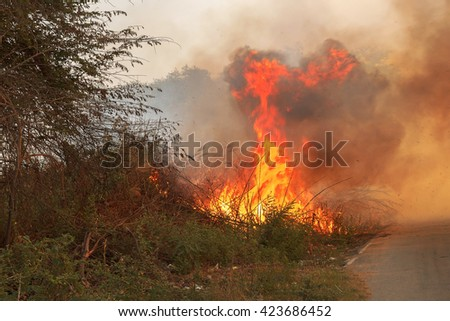 Grass beside the fire, which caused a strong wind to make tertiary smoke pollutes the environment.
