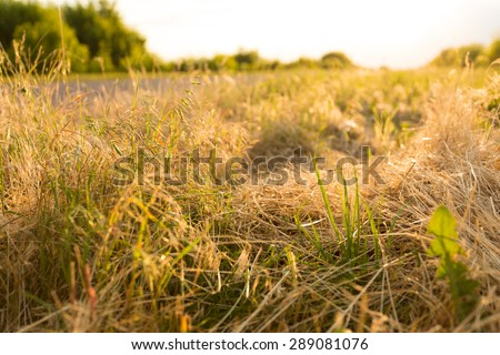 Grass beside the road, backlight - stock photo
