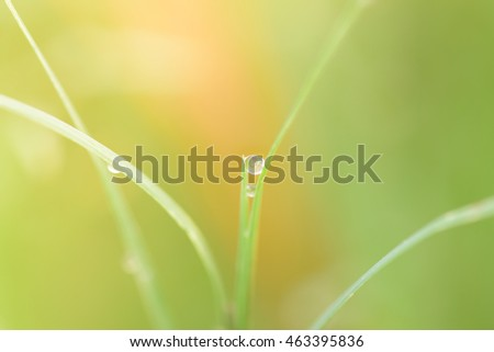 Grass blade with dewdrop in the morning with sun light
