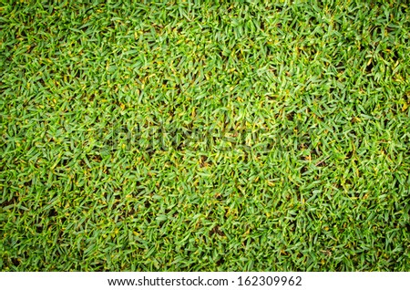 Grass Close-Up  - stock photo