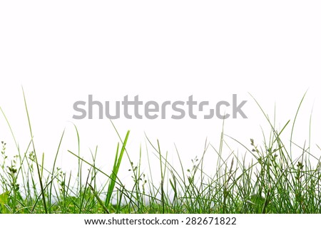 Grass close up on white background - stock photo
