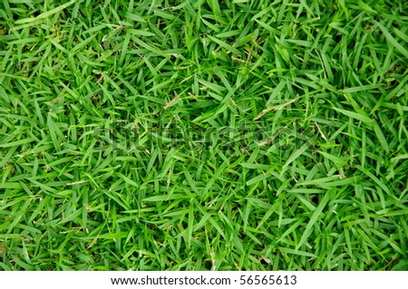 Grass field - stock photo