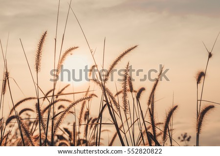 grass field in a fall season with the sun. sunset time. soft focus and blurred background