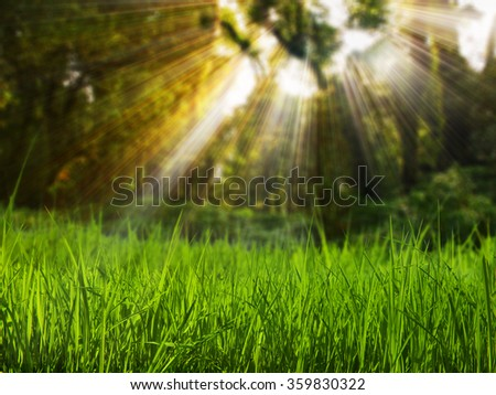 Grass field in forest - stock photo