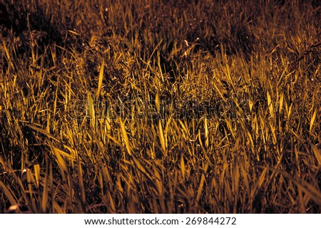 Grass field. Selective focus. Toned photo. Vignette. - stock photo
