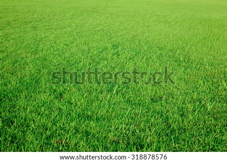 Grass field texture - stock photo