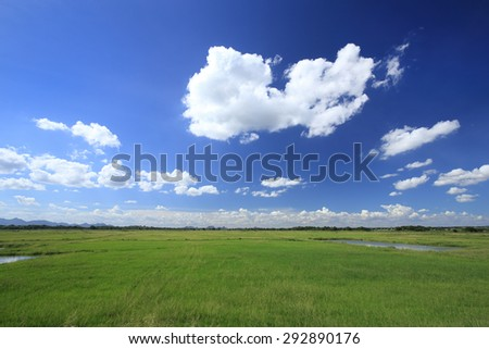 grass field with blue sky and cloud - stock photo