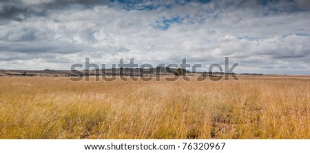 grass field with blue sky and clouds - stock photo