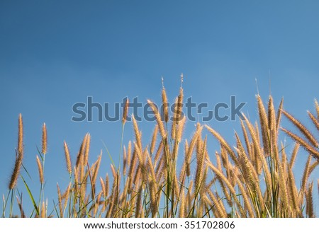 Grass flower and sky