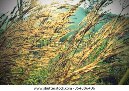 grass flower field by lomo color style - stock photo