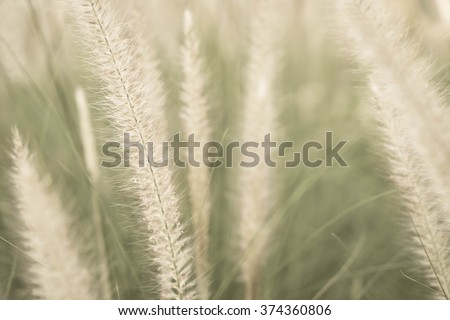 grass flower - soft focus with vintage effect picture style